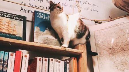 圣托里尼世界最美书店里的猫