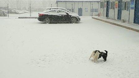 小黑和小白的冬天