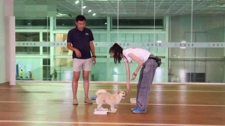 如何训练狗狗站立 狗狗怎么训练 怎样训练狗狗叼东西