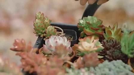 花卉盆景 教师节鲜花图片 花艺培训