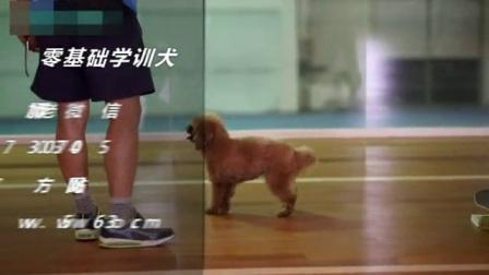 训犬手势图片大全 宠物狗的训练 怎么训练小狗