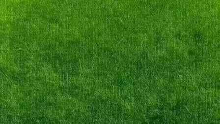 绿草地是为微信聊天背景而准备的,对保护眼睛有好处。