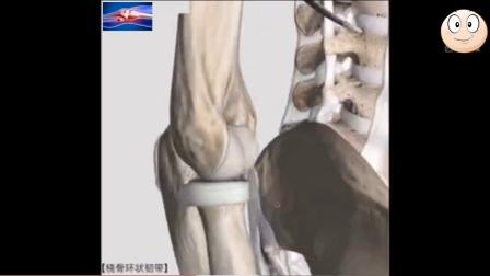 朱波微创—非常棒的肘关节解剖解说