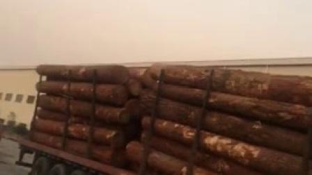 落叶松大料木桩