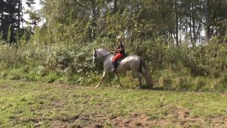 红裤子驯马