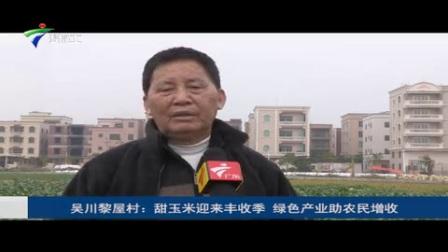 吴川市长岐镇黎屋村900亩良田是全村人民的希望!