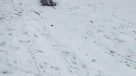逆天汪星人玩滑雪板