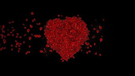 玫瑰花瓣组成心形再散落爱心