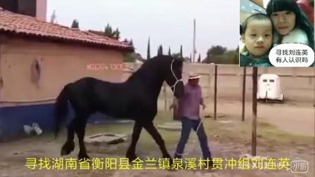 动物世界黑马和白马交配