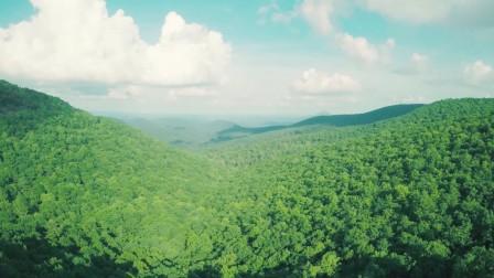 01120-森林航拍
