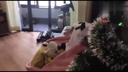 这才是单身狗过圣诞节的正确姿势!