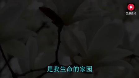 亚东《梦中的绿洲》经典藏族老歌,好听至极!