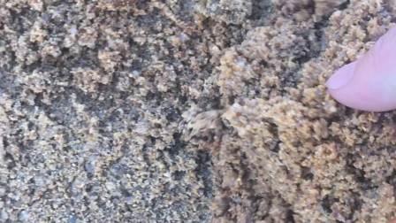 寻抽沙、洗沙设备