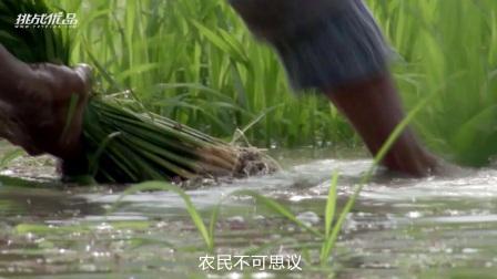 寻访中国工匠精神生产者系列之纯正五常稻花香·潘西洋