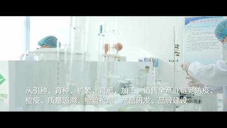 1.28村淘内蒙古站3分钟宣传片