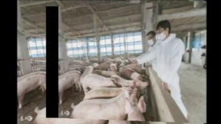 河北省今日猪价行情:2018年1月18日河北省生猪价格播报,下跌!