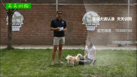 用笼子训练狗狗大小便_训狗师_训练狗狗打哪里