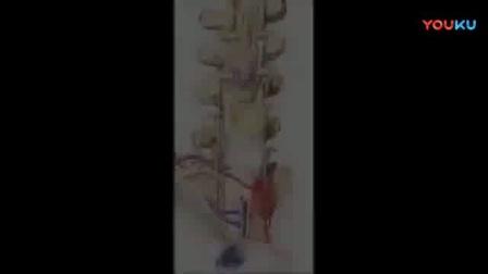 课时55 脊柱断层影像解剖(1)_标清