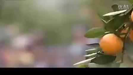 【视频:陈蝶馨《橘子红了》】MV_标清