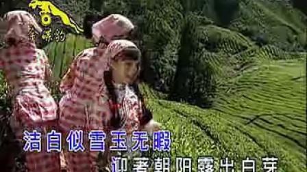 8.我爱山茶花_标清_标清