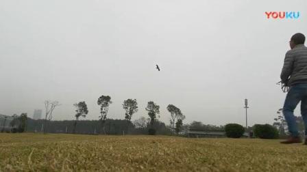 盘鹰和飞机