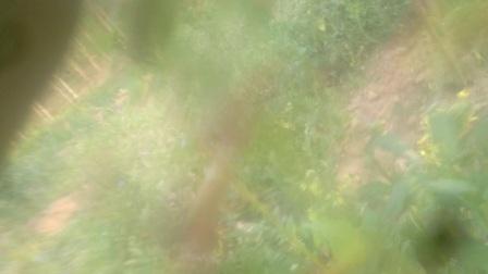 video_20180215_182127