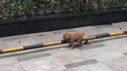 狗狗捕获一只无聊的狗狗