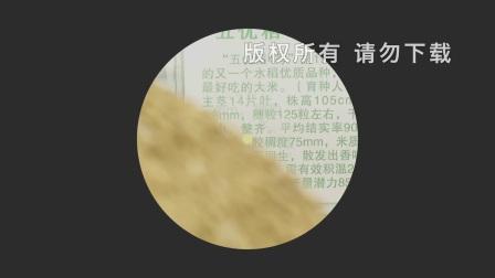 五常大米溯源防伪宣传片