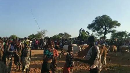 埃塞俄比亚土著哈莫族成人礼,跳牛仪式前鞭打女性