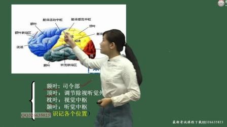 教师招聘考试辅导笔试课程【基础心理学】第1讲:心理学概述(一)