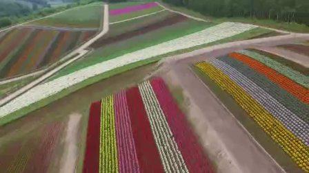 航拍日本北海道美瑛町花园种植园(6293)1080P
