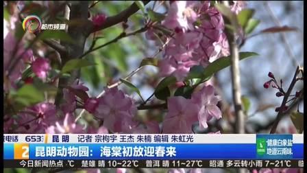 昆明动物园: 海棠初放迎春来