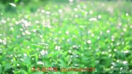 【武夷岩茶】马头岩肉桂