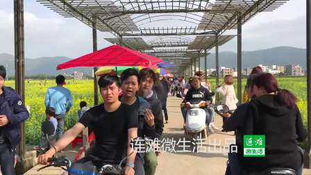 2018连滩兰寨花海