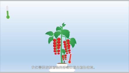 """豪根道新产品   给您植物发言权的软件""""植物声音"""""""