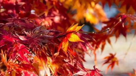 花开四季, 情暖一生, 红尘岁月携手同行