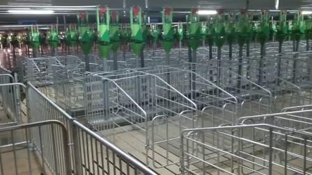 青岛普惠工程自动化养猪设备-民正8
