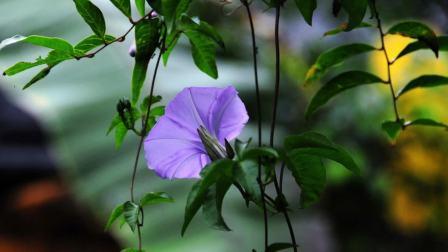 花儿与音乐(一)