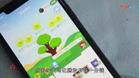 春节马云投放20亿, 效果竟不如没花一分钱的马化腾, 网友表示心疼