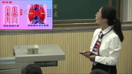 人教版初中生物七下《4.2  血流的管道——血管》陕西马晓琳