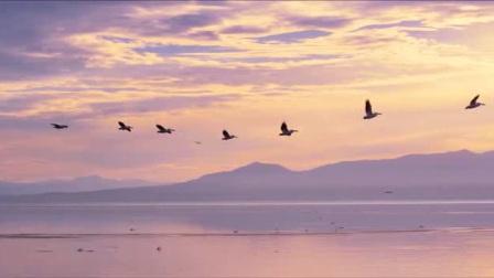 d256小鸟 天空 云彩 远山 海水 led视频 大屏幕 视频素材.[移动影音转换专家]