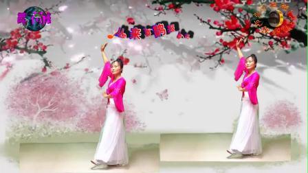 荷花阿萍广场舞《书房门前一枝梅》