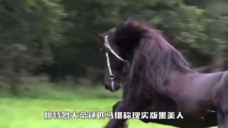 不可思议,世界上配种最贵的马,据说是世界上最帅的马!