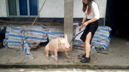女屠夫宰猪_更多视频q656194376的自频道-优酷视频