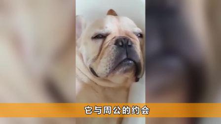 法斗狗狗躺浴缸里打呼噜超大声 甚至还翻白眼