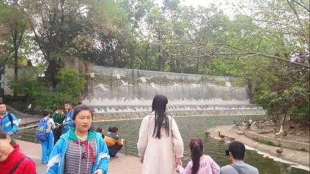 玉小五二班2018春游