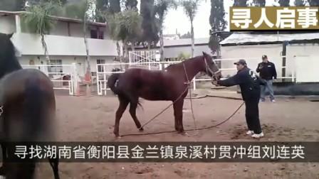 动物世界大棕马怎样交配视频