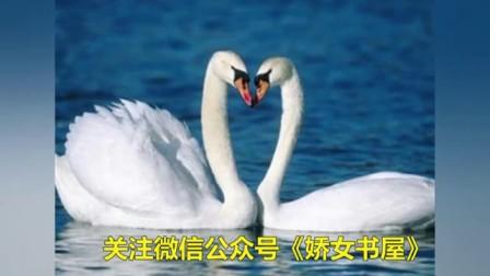 莫言情深不负你总裁小说虐心爱情免费阅读