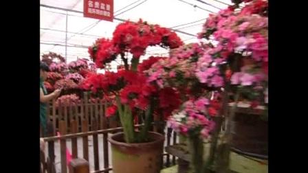 衡山旗袍协会湘潭盘龙大观园一日游纪念