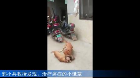 两只狗(王丽英)